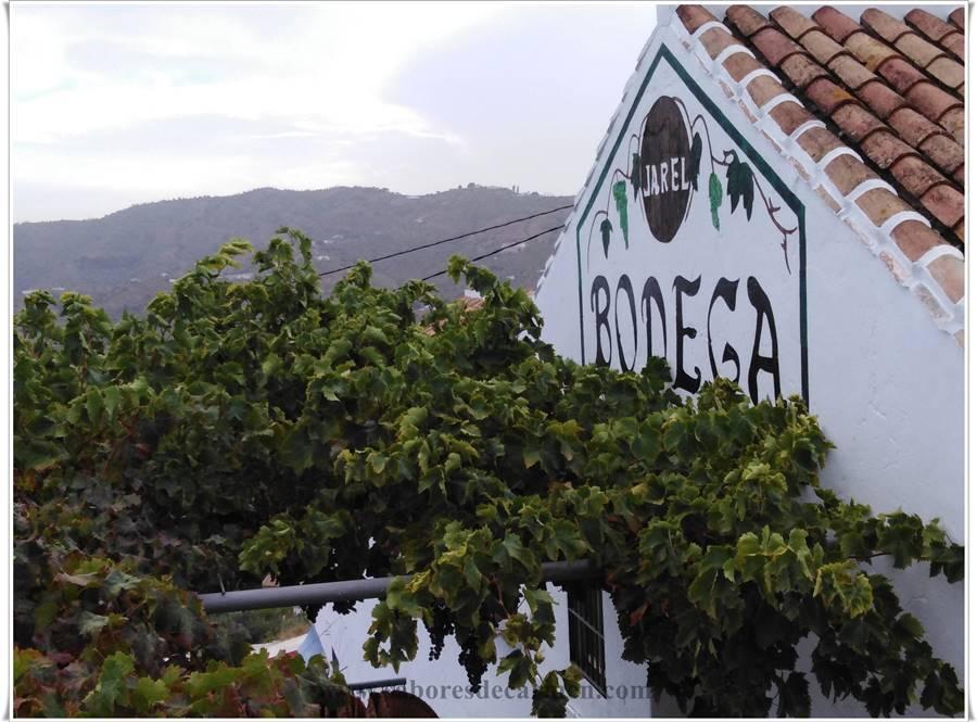 Bodega Almijara